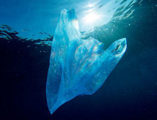 5 datos imprescindibles sobre el abandono de basura en la naturaleza